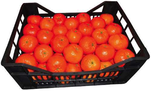 Clementine - Ortofrutta Castello